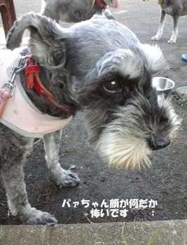 お散歩3.jpg