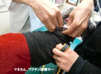 わんこワクチン7.jpg