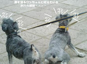ピンキー&マネ2.jpg
