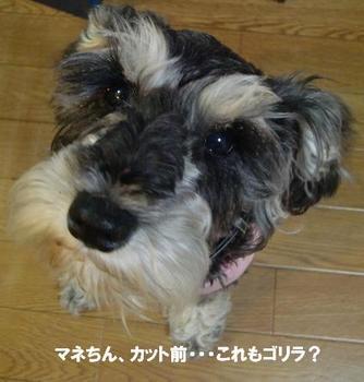 マネ.jpg