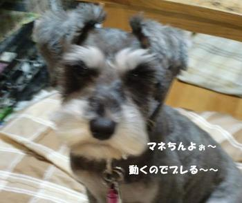マネ4.jpg
