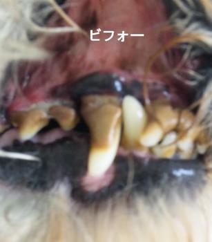 歯石除去.jpg