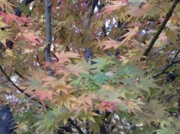 舞岡公園39.jpg